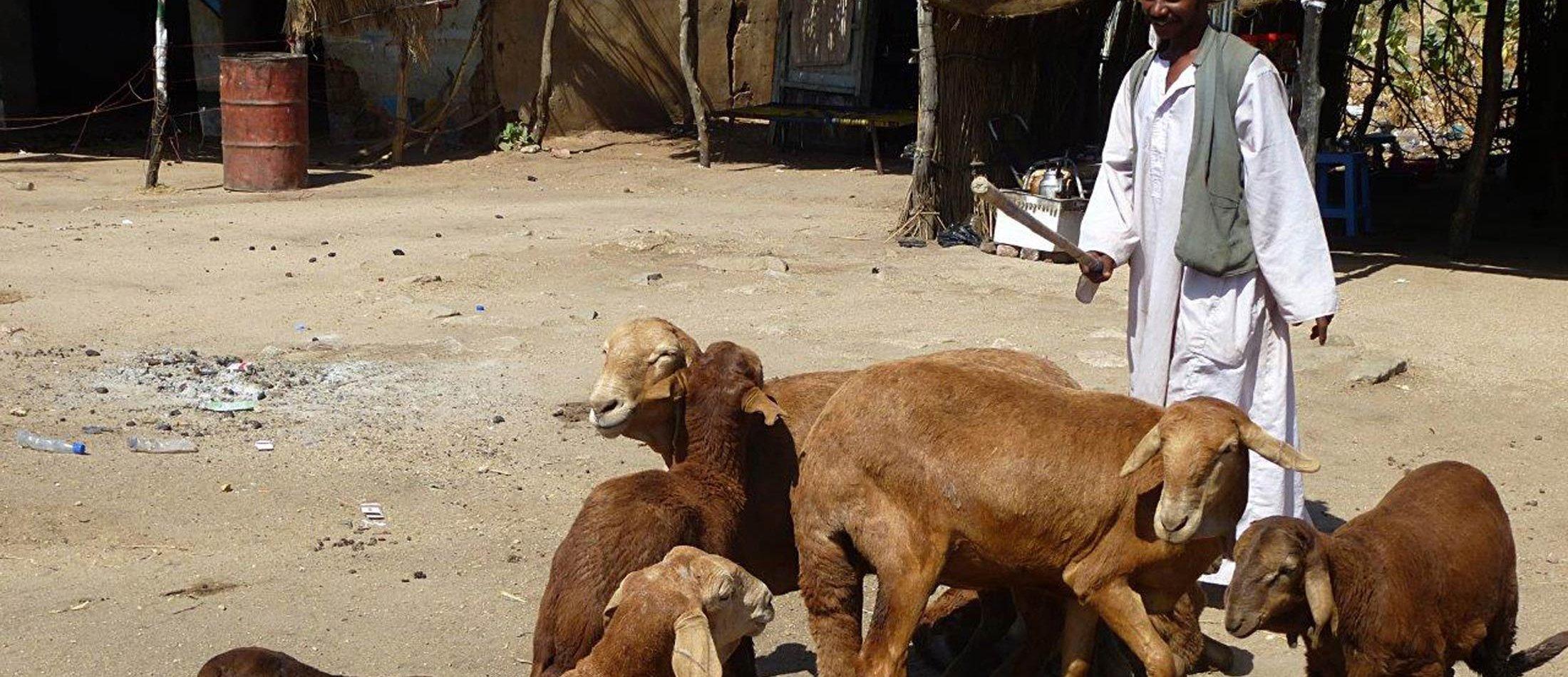 sudan wirtschaft